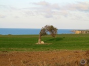 North Cyprus